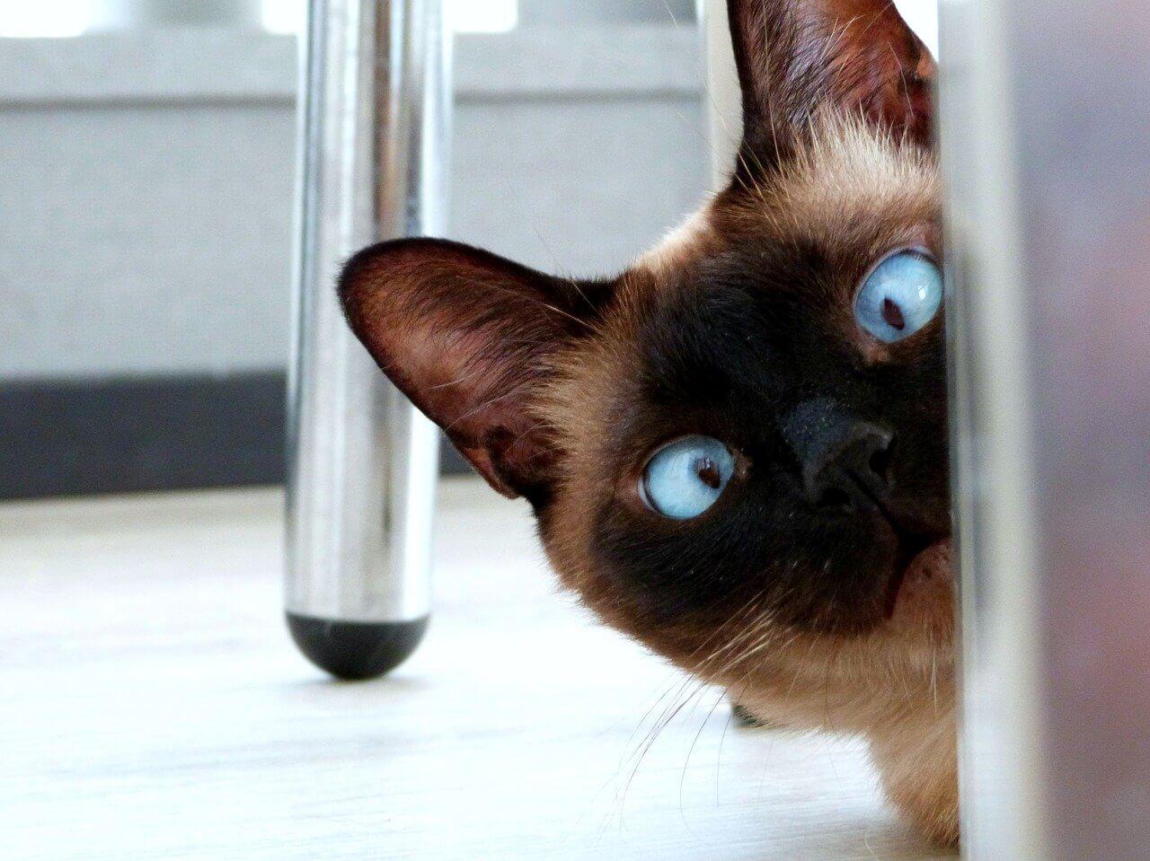 Почему кошки отзываются на «кис-кис»