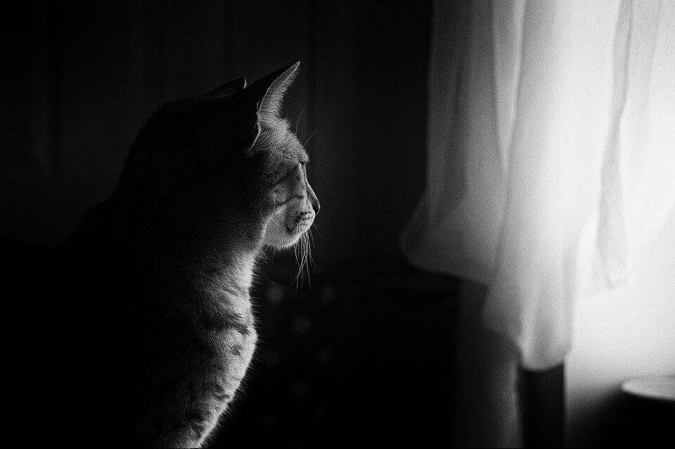 Скучают ли кошки по своим хозяивам